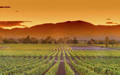 Napa Valley, el paraíso internacional de los mejores viñedosSubtítulo