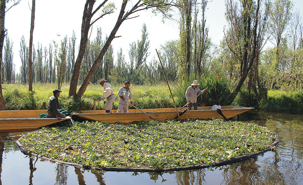 Yolcan y la agricultura orgánica, el secreto de éxito de los restaurantesSubtítulo