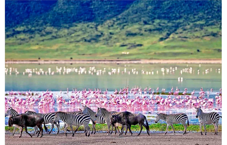 La Gran Migración en Tanzania y Kenia