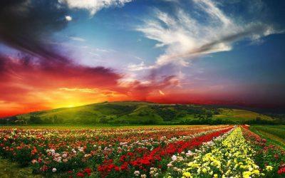 Tipos de flores de cada país y su verdadero significadoSubtítulo