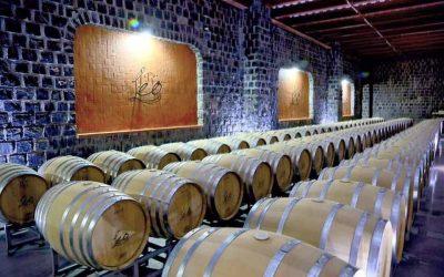 El mejor vino del mundo es mexicanoSubtítulo