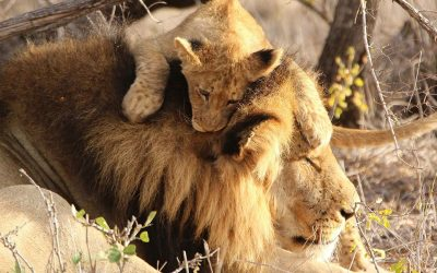 ROAR PRIVÉ, el mejor safari de lujo para conocer ÁfricaSubtítulo