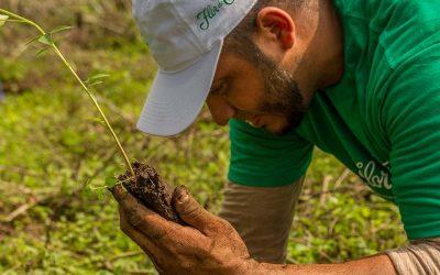 Flor de Caña inicia un programa de reforestaciónSubtítulo