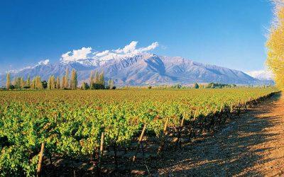 ¿Cuál es el vino perfecto?Subtítulo