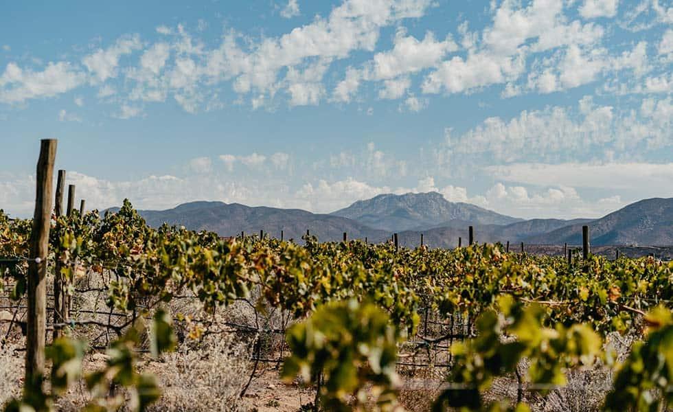Banyan Tree llega a Valle de GuadalupeSubtítulo